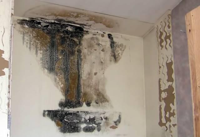 Cómo quitar el moho de las paredes