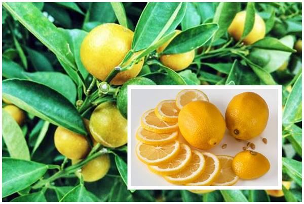 Como limpiar la campana extractora con limón