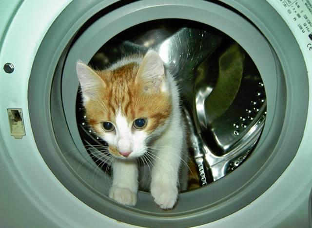 Limpiar las zapatillas blancas en la lavadora