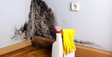 Como eliminar el moho de las paredes para siempre