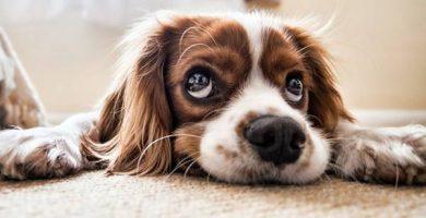 ¿Cómo limpiar una alfombra?