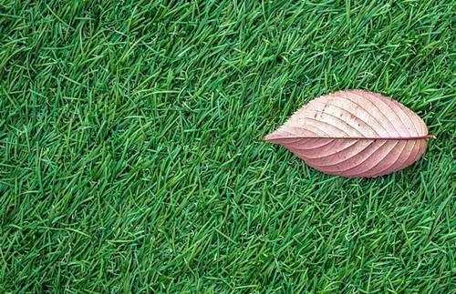 Come pulire l'erba artificiale